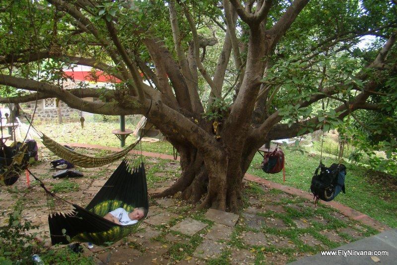 Catching a nap under the Umbar