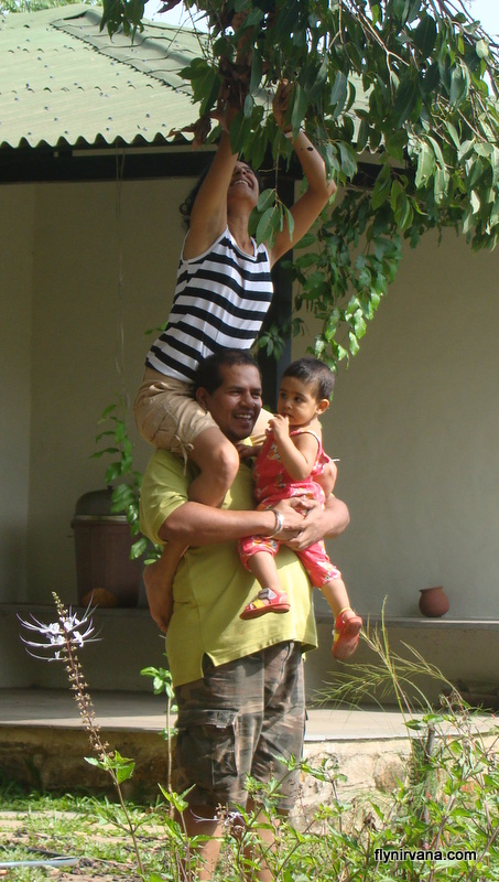 Back at Native Place – Anand and sister Gowri pluck Jamun from the tree  ( with baby Kyra in arms)