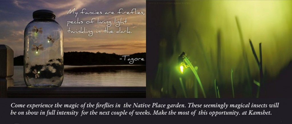 Native Place Firefly Artwork-001
